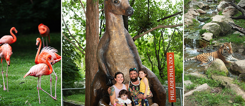 SIG takes over the Philadelphia Zoo for Family Fun Night